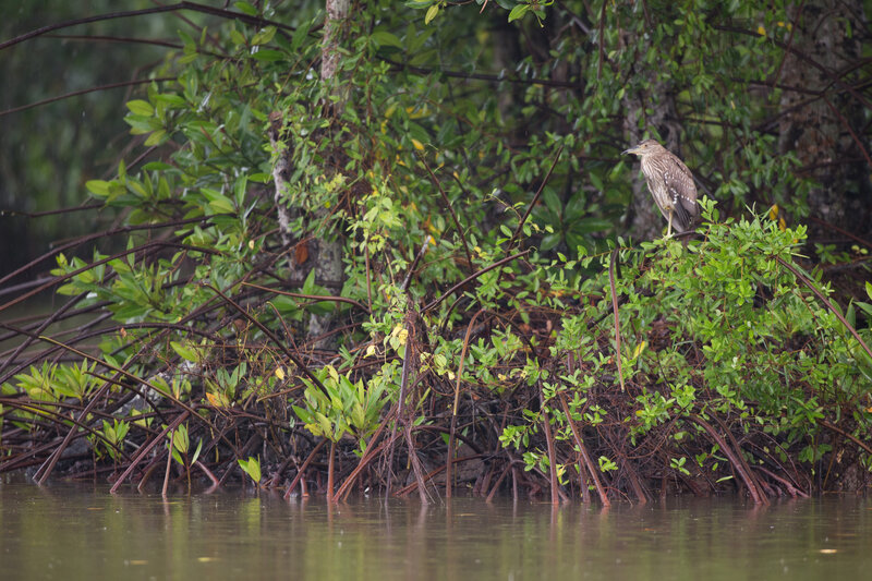 HSBC joins hands with WWF-Vietnam in mangrove forest restoration project