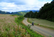 Capturing enthralling pinky buckwheat flowers in Ha Giang this November