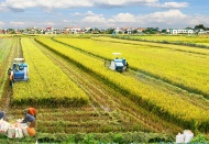 Institutional barriers restrict development of Vietnam farmland market