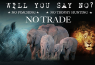 NGOs call for tougher action against illegal wildlife trade amid Covid-19 spread