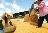 Vietnam PM agrees to resume rice export in April