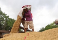 Vietnam may become world's leading rice exporter in 2020: Minister