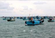 Vietnam keeps combating IUU fishing to lift EC 'yellow card'