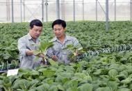 Vietnam needs more hi-tech farming to boost economy