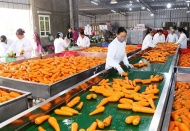 Vietnam fruit, vegetable exports rise above 6% to over US$900 million in Q1