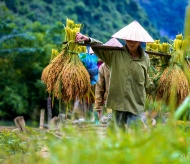 Foreign travel agencies plans to bring tourists to Vietnam early 2021