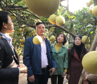 Ha Noi to spend $10.7 million on developing special pomelos