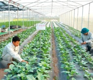 Vietnam and international partners boost cooperation on agriculture