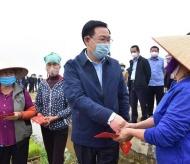 Hanoi's leaders join rice-growing season