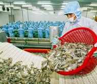 Indian supply recovery may hamper growth of Vietnam shrimp exports in 2021
