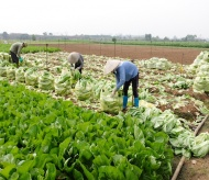 Hanoi to team up with provinces in farm produce consumption