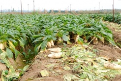 Localities urged to promote sale of farm produce