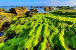Heavenly scenery of green moss in Ly Son Island