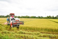Rice exporter to benefit from the Philippines' tariff reduction