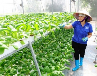 Hanoi agriculture strives to grow at least 3% this year