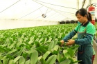 Hanoi's agriculture sector eyes 2.5-3% expansion in 2021-2025