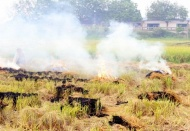 Hanoi wants to end straw burning this year