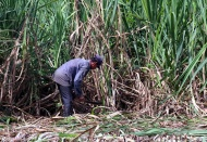 Vietnam imposes anti-dumping duty on sugar from Thailand