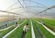 Ministries join hands in promoting sustainable agriculture