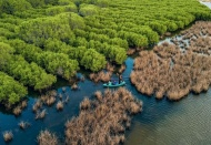 Vietnam to plant 20,000 hectares of forest in response to climate change