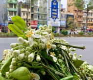 Scent of grapefruit flowers filled up streets of Hanoi