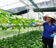 IFC, McCormick, and Citi support sustainable agricultural production in Vietnam