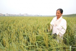 Vietnam and Africa bolster cooperation in agricultural trade and investment