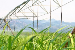 Vietnam to investigate against trade remedy evasion of sugar from Thailand
