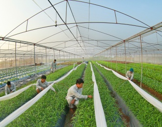 Digitalization in agricultural sector as key fundamental for Vietnam's growth